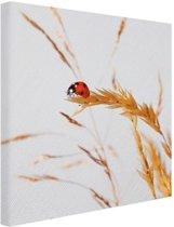 Lieveheersbeestje op gras Canvas 60x40 cm - Foto print op Canvas schilderij (Wanddecoratie)