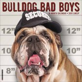 Engelse Buldog - Bulldog Bad Boys Kalender 2019