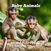 Baby Animals 8.5 X 8.5 Calendar September 2019 -December 2020