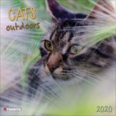 Katten - Cats Outdoors Kalender 2020
