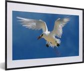 Foto in lijst - Roodsnavelkeerkringvogel strekt zijn vleugels fotolijst zwart met witte passe-partout 60x40 cm - Poster in lijst (Wanddecoratie woonkamer / slaapkamer)