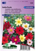 Sluis Garden - Dahlia Piccolo Mix