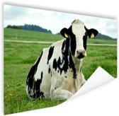 Rustende Holsteinkoe Poster 90x60 cm - Foto print op Poster (wanddecoratie woonkamer / slaapkamer) / Dieren Poster