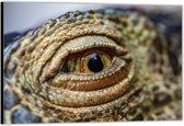 Dibond –Oog van een Krokodil– 40x30 Foto op Aluminium (Wanddecoratie van metaal)