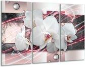 Glas schilderij Orchidee, Bloemen | Roze, Grijs, Wit | 120x80cm 3Luik | Foto print op Glas |  F007811