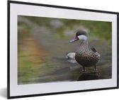 Foto in lijst - Een Bahamapijlstaart in het water fotolijst zwart met witte passe-partout 60x40 cm - Poster in lijst (Wanddecoratie woonkamer / slaapkamer)