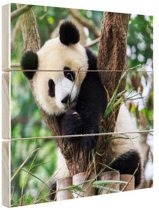 Panda welp Hout 160x120 cm - Foto print op Hout (Wanddecoratie) XXL / Groot formaat!