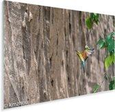 Blauwwangbijeneter is aan het vliegen Plexiglas 180x120 cm - Foto print op Glas (Plexiglas wanddecoratie) XXL / Groot formaat!