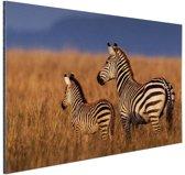 FotoCadeau.nl - Moeder en baby zebra Aluminium 90x60 cm - Foto print op Aluminium (metaal wanddecoratie)