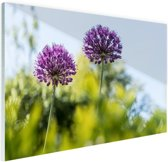 FotoCadeau.nl - Paarse allium Glas 120x80 cm - Foto print op Glas (Plexiglas wanddecoratie)