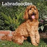 Labradoodles wand kalender 2019
