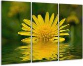 Glasschilderij Bloem | Geel, Groen | 120x80cm 3Luik | Foto print op Glas |  F001548