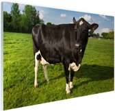 Starende zwart-witte koe Glas 90x60 cm - Foto print op Glas (Plexiglas wanddecoratie)