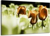 Canvas schilderij Tulpen | Bruin, Groen, Wit | 140x90cm 1Luik