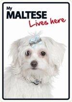 Maltese lives here