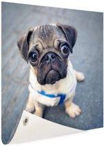 Puppy ogen Tuinposter 50x50 cm - klein - Tuindoek / Buitencanvas / Schilderijen voor buiten (tuin decoratie)