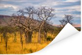 Een alleenstaande Afrikaanse baobab of Adansonia digitata in Australië Poster 90x60 cm - Foto print op Poster (wanddecoratie woonkamer / slaapkamer)