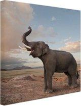 FotoCadeau.nl - Trompetterende olifant in de woestijn Canvas 20x20 cm - Foto print op Canvas schilderij (Wanddecoratie)