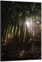 Dibond –Tropisch  Bos– 60x90cm Foto op Dibond;Aluminium (Wanddecoratie van metaal)