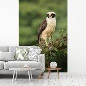 Fotobehang vinyl - Lachvalk en een koningsslang in Costa Rica breedte 180 cm x hoogte 270 cm - Foto print op behang (in 7 formaten beschikbaar)