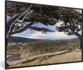 Foto in lijst - De prachtige Lenga beuk op een zonnige dag in het Nationaal park Tierra del Fuego fotolijst zwart 60x40 cm - Poster in lijst (Wanddecoratie woonkamer / slaapkamer)