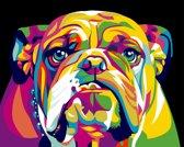 Schilder op Nummer Engelse Bulldog afm: 16,5x13 cm