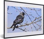 Foto in lijst - Foto van een kauw in een boom op een winterdag fotolijst zwart met witte passe-partout klein 40x30 cm - Poster in lijst (Wanddecoratie woonkamer / slaapkamer)
