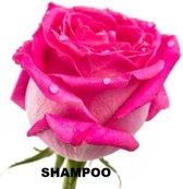 Natuurlijke zoete roos 2-1 shampoo
