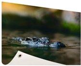 Krokodil aan de oppervlakte Tuinposter 60x40 cm - klein - Tuindoek / Buitencanvas / Schilderijen voor buiten (tuin decoratie)