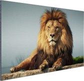Rustende leeuw op een rotsblok Aluminium 30x20 cm - klein - Foto print op Aluminium (metaal wanddecoratie)