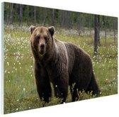 Bruine beer in het bos Glas 60x40 cm - Foto print op Glas (Plexiglas wanddecoratie)