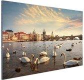 Zwanen Karelsbrug Praag Aluminium 120x80 cm - Foto print op Aluminium (metaal wanddecoratie)