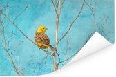 Geelgors met een blauwe lucht op de achtergrond Poster 30x20 cm - klein - Foto print op Poster (wanddecoratie woonkamer / slaapkamer)