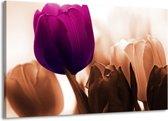 Canvas schilderij Tulp | Paars, Bruin, Wit | 140x90cm 1Luik