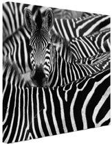 Zebra zwart-wit  Canvas 80x60 cm - Foto print op Canvas schilderij (Wanddecoratie woonkamer / slaapkamer)