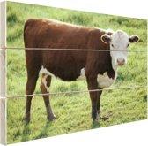 Koe staand op gras in Canada Hout 120x80 cm - Foto print op Hout (Wanddecoratie)