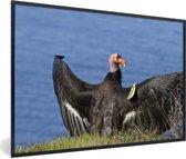 Foto in lijst - Een Californische condor aan de rand van de Stille Oceaan fotolijst zwart 60x40 cm - Poster in lijst (Wanddecoratie woonkamer / slaapkamer)