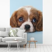 Fotobehang vinyl - Cavalier King Charles-spaniël puppy breedte 220 cm x hoogte 300 cm - Foto print op behang (in 7 formaten beschikbaar)