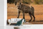 Fotobehang vinyl - Gevlekte Hyena loopt over de Afrikaanse vlaktes breedte 600 cm x hoogte 400 cm - Foto print op behang (in 7 formaten beschikbaar)