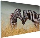 Zebras  Glas 90x60 cm - Foto print op Glas (Plexiglas wanddecoratie)