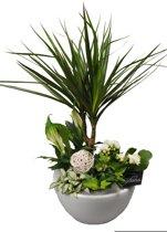 Kamerplant van Botanicly – Arrangement Basis creatie in schaal keramiek witincl. bloempot witals set – Hoogte: 45 cm