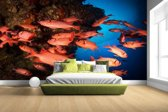 FotoCadeau.nl - Oranje vissen in koraalrif Fotobehang 380x265