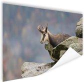 Geit met horens foto afdruk Poster 60x40 cm - Foto print op Poster (wanddecoratie woonkamer / slaapkamer) / Dieren Poster