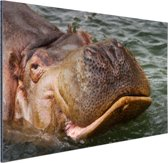Zwemmende nijlpaard Aluminium 90x60 cm - Foto print op Aluminium (metaal wanddecoratie)