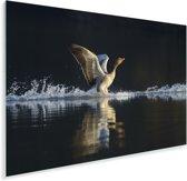 Een grauwe gans landt in het water Plexiglas 90x60 cm - Foto print op Glas (Plexiglas wanddecoratie)