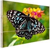 Blauwe Tijger vlinder Hout 30x20 cm - klein - Foto print op Hout (Wanddecoratie)