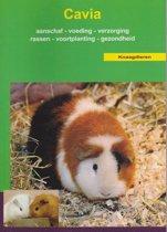Boek cover Cavia - OD Basis boek van Onbekend (Paperback)