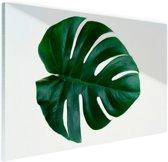 Gatenplant blad botanisch Glas 120x80 cm - Foto print op Glas (Plexiglas wanddecoratie)