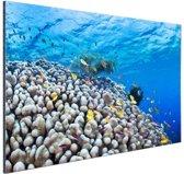 Onderwater rif met vissen Aluminium 90x60 cm - Foto print op Aluminium (metaal wanddecoratie)