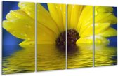 Glasschilderij Bloem   Geel, Bruin, Grijs   160x80cm 4Luik   Foto print op Glas    F000409